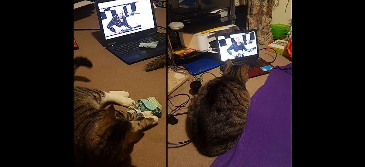 TV Cats